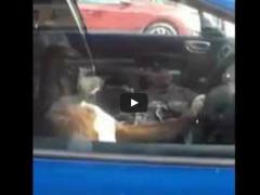 Pourquoi il ne faut pas laisser son chien enfermé dans la voiture